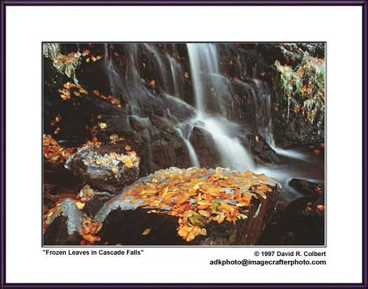 Adirondack Photography - Frozen Leaves in Cascade Falls